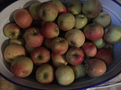 apples 001